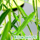 White Willow Bark Extracts