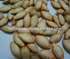 snow white pumpkin seeds(11cm-14cm,11mm-13mm)