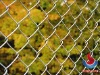 shengwei chain link fence(manufacturer)