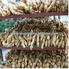 30lbs pvc box 250g up fresh ginger