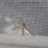 cheap insect protection window screens