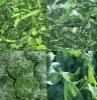 New crop chinese frozen spinach