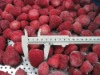 SUPPLY frozen strawberry