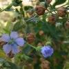 25kg Linseed Oil (Linum Usitatissimum L), Flaxseed Oil, CAS8001-26-1