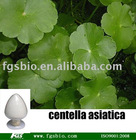 best price of Centella asiatica p.e