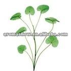 Asiatic Acid 95%; Centella Asiatica Extract; CAS 464-92-6
