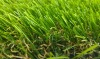 New arrival U-shaped series artifiical grass prices