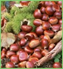 fresh chestnut in mesh bag