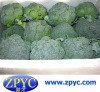 Chinese Fresh Broccoli