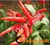 Pepper extract/Capsaicin