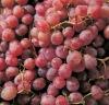 2012 grade 1 Yunnan Red globe grapes