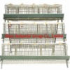 chicken laying egg cages for poultry farm