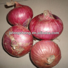 red onion fresh