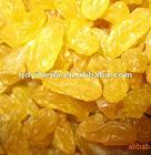 golden raisins sultana raisins white grape seedless raisin dried fruit snack fruit
