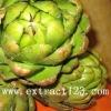 organic Artichoke leaf extract gmp