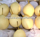 Fresh Ya Pear from China