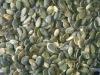 pumpkin seed kernels GWS A