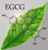 High Quality Green Tea Extract,CAS:84650-60-2