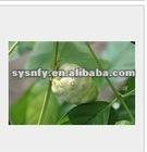 High quality Noni Extract Powder
