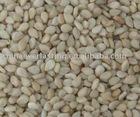 Ethiopia Wellega whitish sesame seeds