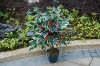 Solar strawberry tree/Solar artificial plant/Artificial lemon tree(SOL8092-1)