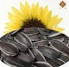 bulk or OEM high quality roasted sunflower seeds