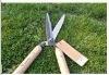 hedge green scissors