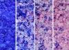 2-5mm Blue silica gel/change color