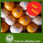 navel orange best price in china hot sale