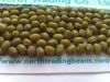 Mung Beans/Green Mung Beans( Jilin Orgin, 2010 crop, Hps, sprouting type)