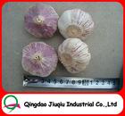 JQ Shandong Garlic Capital