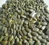 green pumpkin seed kernels (GWS)