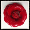leather red rose flower