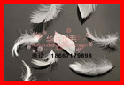 30%washed white duck feather 30/70