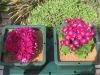 nutrient medium (Nutrient Syderolite) for roof garden