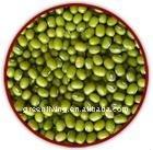 chinese mung bean