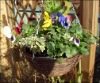 Hanging Basket for Flower Arrangement