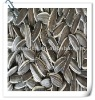 2011 new crop Long type high quality sunflower seed 5009