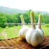 Natural made garlic