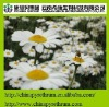 insectide pyrethrum extract