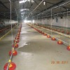 Automatic nipple drinking system for breeders and broilers