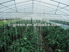 Agricultural economical cucumber greenhouse