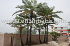 artificial tree fern, Alsophila group, outdoor tree