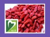 ISO&GMP Goji Berry P.E(5%-70%Polysaccharides) wolfberry extract By Factory