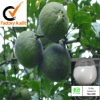 synephrine can accelerate fat metabolism (citrus aurantium extract)