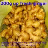 china fresh yellow ginger cheap price