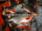 Sell Frozen Pacu