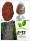High Quality Pine Bark Extract