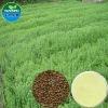 Pure Natual Flax Seed /Flax lignans, SDG