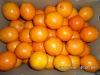 Chinese best price orange fruit
